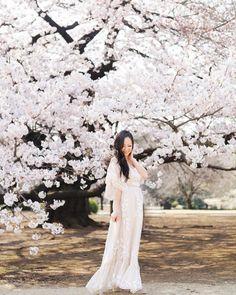 Kirsikan kukkia online dating site matchmaking Palvelut Etelä-Floridassa