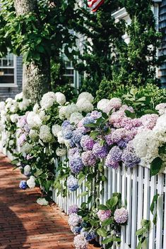 On this New England island, every building appears as though it were created expressly for a storybook. Dotted with quaint shingled cottages and sprawling guesthouses, Nantucket is a welcome retreat f Hydrangea Not Blooming, Hydrangea Garden, Hydrangeas, Flowers Garden, Beautiful Gardens, Beautiful Flowers, Victoria Magazine, Garden Cottage, Dream Garden