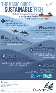 [Infographic] Basic Guide to Sustainable Fishing