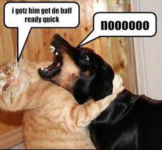Funny Cats vs Funny Dogs   funny dogs vs funny cats 6 Funny Dogs vs Funny Cats Wallpapers