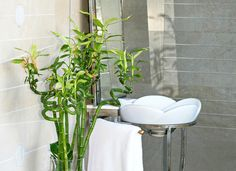 Best plant varieties for the bathroom