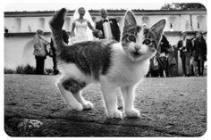 Cat wedding photo bombing. http://weddingsinthesky.blogspot.com/2013/03/weirdest-creepiest-wedding-photos.html