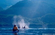 Kayaking in British Columbia Sea, with a parade of Orcas?? Yes, please. Someday.