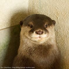 Otter sits for his picture to be taken - January 17, 2013
