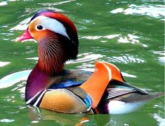 10 Of The Most Beautiful Birds In The World - Page 2 of 10 - Funzim