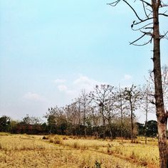 Beautiful view from Central Java. #photography #itookthispicture #iphone5