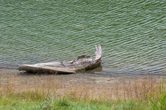 Lake by TalyaPhoto on @creativemarket