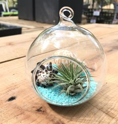 "3"" Tabletop and Hanging Terrarium With One Hook"