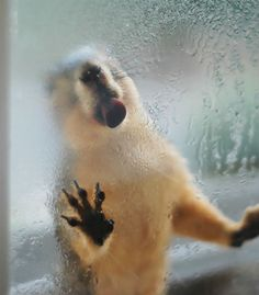 Having A Nice Drink Of Condensation From The Window