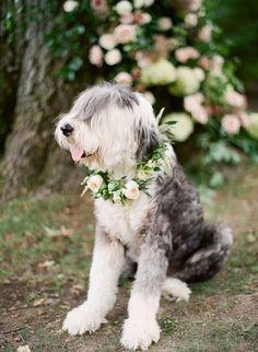 A furry friend! http://www.stylemepretty.com/2016/11/14/formal-southern-elegance-blush-velvet-and-claret-inspiration/ Photography: Studio Elle - http://studioellephoto.com/