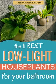 Do you hae a dark, low-light bathroom? Do you still want to be able to enjoy the fresh, clean look that houseplants bring?! Then grab one of these low light indoor plants that are perfect for the bathroom! They'll love the humidity as well! So pick up one of these and have 11 great options to pick from! Best Indoor Plants, Air Plants, House Plants Decor, Plant Decor, Light Bathroom, Bathroom Lighting, Apartment Plants, Low Light Plants, Low Lights