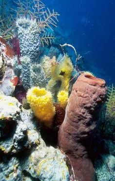 if sponges are mashed up together and left in salt water they will eventually put themselves back together.