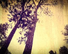 Fine Art Photography Print  stylized yellow vintage trees by photographybyVena, $30.00