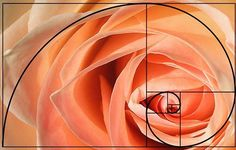 Golden ratio applied to photography with Golden spiral similar to fibonacci spiral Sacred Architecture, Cultural Architecture, Architecture Tattoo, Golden Ratio In Nature, Fibonacci Sequence In Nature, Fibonacci Sequence Examples, Fibonacci Flower, Fibonacci Golden Ratio, The Golden Mean
