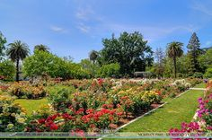 The Sacramento Real Estate Photographers Community Showcase ----------- Feel free to share any of our photos and videos with your friends or clients!   View the entire database of photos and video at http://ift.tt/2jc7cb5 ----------- The McKinley Playground is a colorful custom designed playground which is based on East Sacramentos 125 year old past.  It includes an Alhambra Theater entry archway river boat street trolley the Tower bridge large tree house rubber surfacing with animal…
