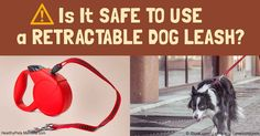 Retractable leashes allow dogs more freedom to sniff and poke around on walks, but there are many downsides to this type of leash.