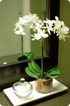 potted orchid. Like the glass vase