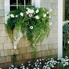 Fringy Laub und tiefgrüner Zierspargel kombinieren sich herrlich unterhalb mit den üppigen Blüten der Begonien. Die Anordnung ist gut gelungen. A. Zierspargel (Asparagus sprengeri) – 2 B. Knollenbegonien (Begonia 'Go-Go White') -