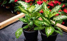 Plantas para proteger e atrair boa sorte para a casa o ano todo - Jardinagem - iG