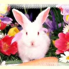 Jolie Photo, Paste, Happy Easter, Photos, Bunny Rabbits, Animals, Gifs, Virtual Card, Quotes
