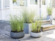 Outdoor Plants, Outdoor Gardens, Rue Verte, Porch Area, Modern Exterior, Outdoor Life, Garden Inspiration, The Great Outdoors, Gardens