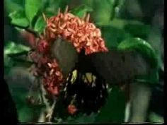 Els insectes - YouTube