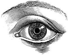 The human eye, Old medical atlas, illustration Digital Image, 64. $8,88, via Etsy.