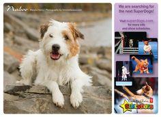 Naboo 2013 Calendar, Fundraising, Animals, Animales, Animaux, Animal, Animais, Fundraisers