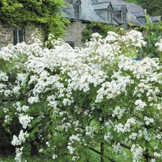 Rambling Rector - Highly Recommended - Popular Searches