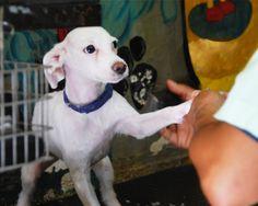 Atención Integral Brindamos atención médica de primera calidad para cualquier tipo de mascota, especialmente perros y gatos.   Consulta médica, vacunas y desparasitaciones  Urgencia  Hospitalización  Exámenes clínicos y Rayos X  Asesoría nutricional  Cuidados prenatales y asistencia en …