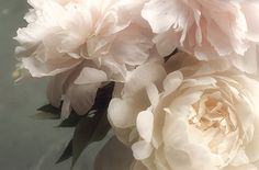 Peony Photograph Flower Photography Shabby Chic Wall by JudyStalus, $25.00