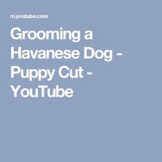 Grooming a Havanese Dog - Puppy Cut - YouTube