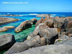 Click the image for details and photos of a fantastic walk from Greens Pool to a secret beach, taking in the Elephant Rocks and Elephant Cove along the way. This photo shows the spectacular views of Elephant Cove from up high on the Elephant Rocks. Denmark, Western Australia.