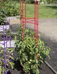 "59"" Happy Harvest Plant Supports, Set of 3"