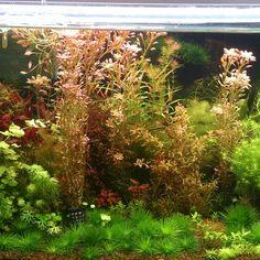 My aquarium 3