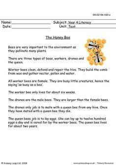 PrimaryLeap.co.uk - The honey bee Worksheet