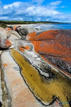 Bay of fires, tasmania, australia places to travel, places to see, travel d The Places Youll Go, Great Places, Places To See, Beautiful Places, Tasmania, Places To Travel, Travel Destinations, Travel Tips, Australian Road Trip
