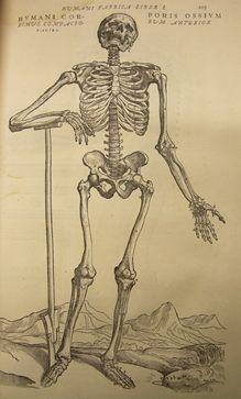 gravure extraite de André VÉSALE : De Humani Corporis Fabrica, Bâle, Jean Oporin, 1555.
