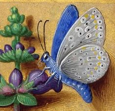 Horae ad usum Romanum, dites Grandes Heures d'Anne de Bretagne Author :  Bourdichon, Jean (1457 ?-1521). Book Of Hours, Renaissance Fashion, Old Paper, French Art, Illuminated Manuscript, Botanical Illustration, Miniatures, Butterfly, Medieval Times