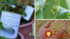 Geniálne triky pre vašu záhradu, ktoré by ste mali rozhodne poznať!