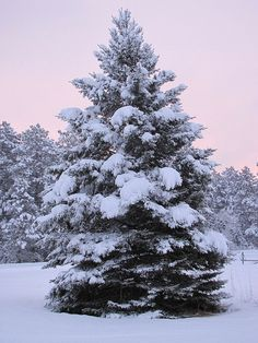 Ideas For Pine Tree Painting Snow Scenes Winter Magic, Winter Fun, Winter Christmas, Winter Snow, Pine Tree Painting, Painting Snow, Winter Scenery, Winter Trees, Snow Covered Christmas Trees