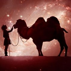 Magic Coffee blend is a medium, earthy blend with a bright twist and a stout french kick. The original house blend from to help remind people to live lightly in the realm of magical earth. Fair Trade Coffee, Blended Coffee, Java, Earthy, Mud, Coffee Shop, Bright, Magic, Horses