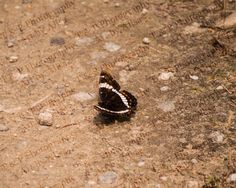 BUTTERFLY Digital download photography instant by Turtlesandpeace