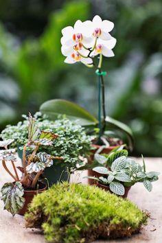 19 Best Terrarium Plants: via The Fern & Mossery