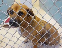 **URGENT!  NEEDS RESCUED BY 9:00 AM EST 10/24/2015.** Depressed, sad and lonely dog on kill list