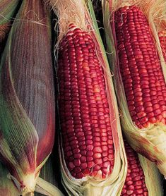 Corn 'Ruby Queen' - It's really red and amazingly sweet. Plants grow to Ready to harvest in 75 days. Fruit And Veg, Fruits And Vegetables, Growing Vegetables, Paradis Du Fruit, In Natura, Exotic Fruit, Sweet Corn, Edible Garden, Burpees