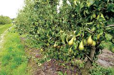 Geleide Streekproductenwandeling in 's-Gravenvoeren Fruit, Medium, The Fruit, Medium-length Hairstyle