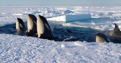 """""""FROZEN PLANET"""": HOW THEY GOT THOSE JAW-DROPPING SHOTS"""