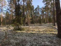 Sorvortan metsiä