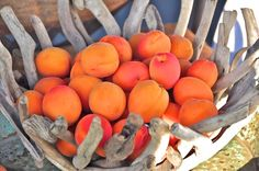 Okanagan Apricots Heart Healthy Desserts, Healthy Recipes, Healthy Food, Apricot Tart, Vernon Bc, Fruits And Veggies, Orchards, Wineries, Peaches